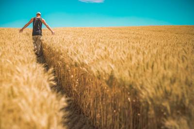 cereal 1866559 1280 400x267 Replay do tira dúvidas sobre propriedades rurais inteligentes